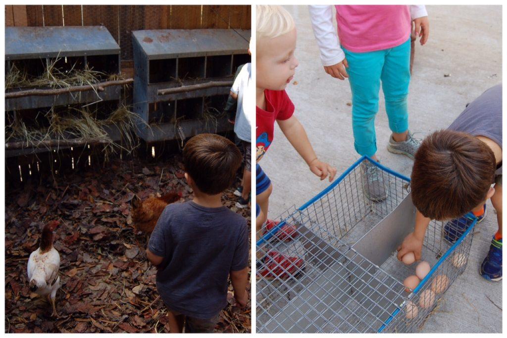 enota chicken coop