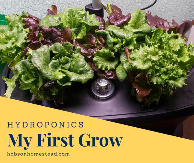 hyrdoponics first grow