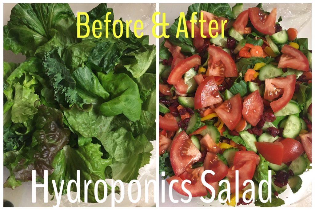hydroponics salad