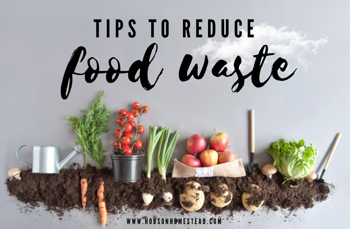 tips to reduce food waste blog