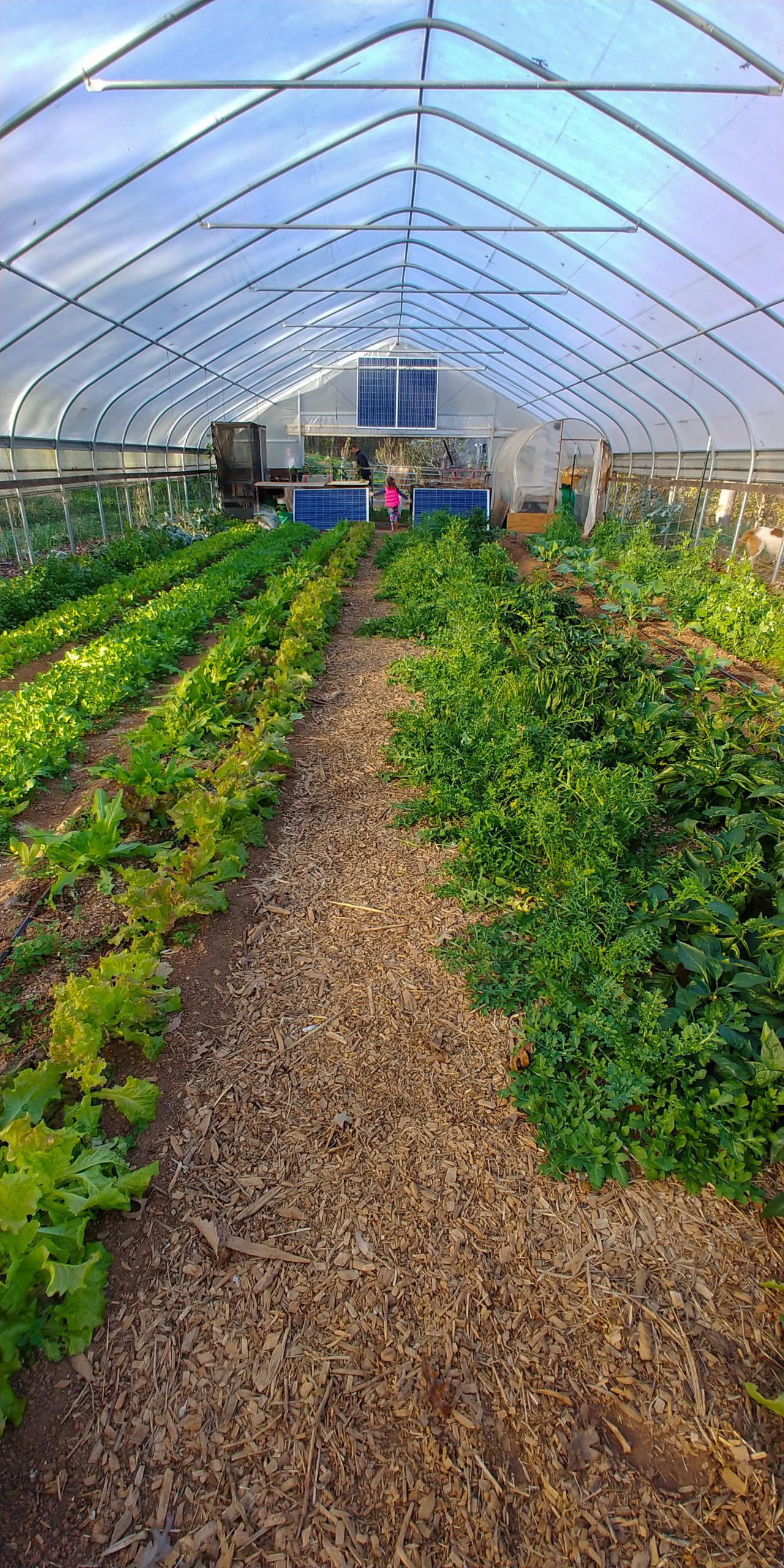 Humble Vine Farm, Cleveland GA