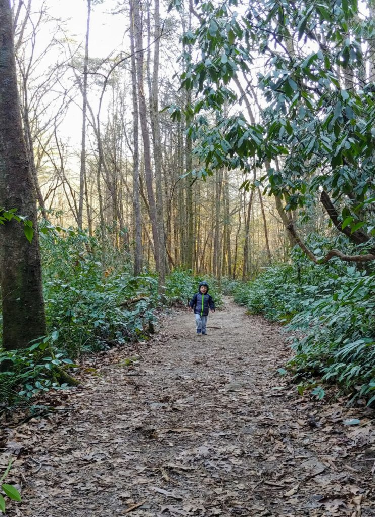 desoto falls trail hiking with kids and toddler